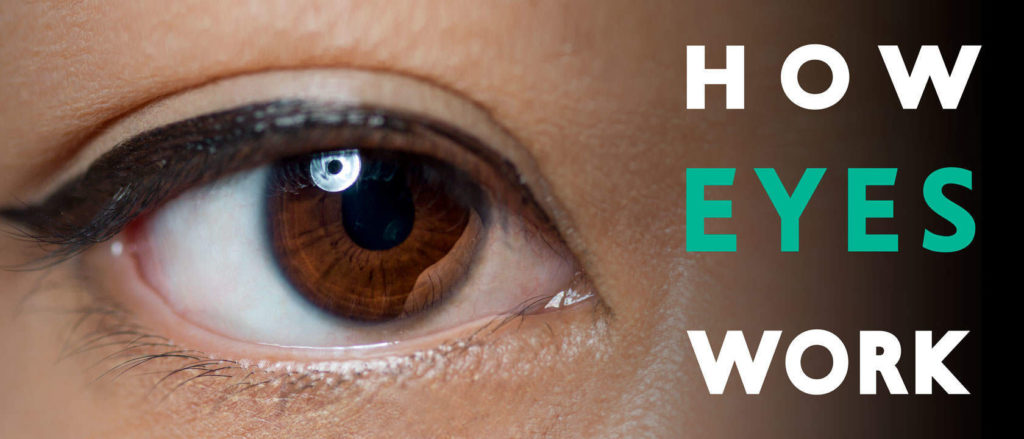 How Our Eyes Work – A Simple Biology Study - Boutique Retouching - how our eyes work signal processing color management header 1